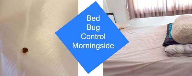 Bed Bug Control Morningside