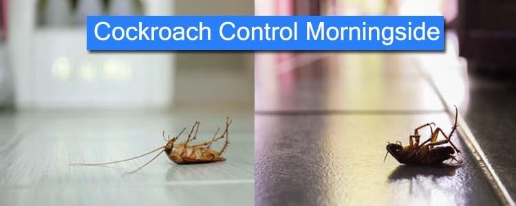 Cockroach Control Morningside